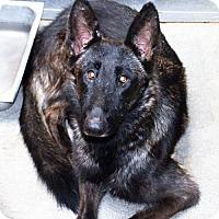 Adopt A Pet :: Genevieve - San Jacinto, CA