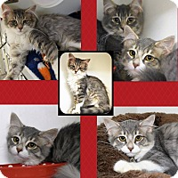 Adopt A Pet :: Ruthie, Rosalie and Reese - Seville, OH