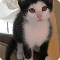 Adopt A Pet :: Jeb - Lebanon, PA