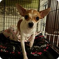 Adopt A Pet :: Bambi - Lodi, CA