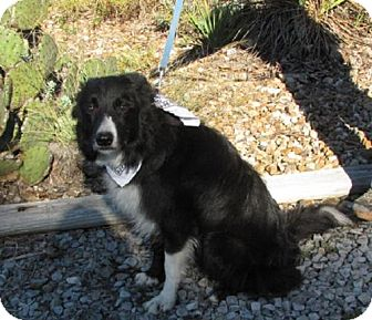 Border Collie Mix Dog for adoption in Providence, Rhode Island - Jake