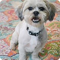 Adopt A Pet :: Jeb - Staunton, VA