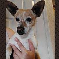 Adopt A Pet :: Mr. Toodles - Reno, NV