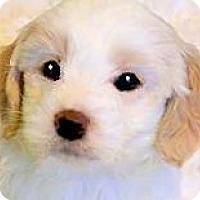 Adopt A Pet :: FRISCO(OUR