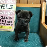 Adopt A Pet :: PIXIE - Gustine, CA