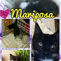 Adopt A Pet :: Mariposa - Scottsdale, AZ