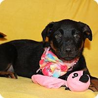 Adopt A Pet :: Greta - Trenton, NJ