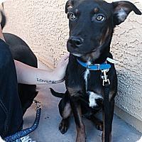 Adopt A Pet :: Titan - Gilbert, AZ