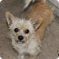 Adopt A Pet :: Buttercup - Kempner, TX