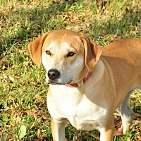 Adopt A Pet :: James OKs31 - Davis, OK