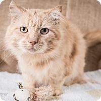 Adopt A Pet :: Shelby - Lambertville, NJ