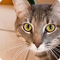 Adopt A Pet :: Luxor - Ann Arbor, MI