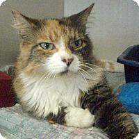 Adopt A Pet :: Princess Bee - Germansville, PA
