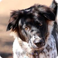 Adopt A Pet :: JAX - San Pedro, CA