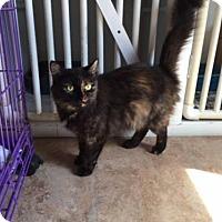 Adopt A Pet :: Twinkle - Erwin, TN