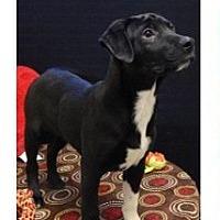 Adopt A Pet :: Doc - Carteret/Eatontown, NJ