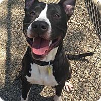 Adopt A Pet :: Taurus - Cleveland, OH