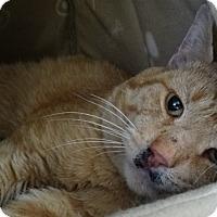 Adopt A Pet :: Ferdinand - Elyria, OH