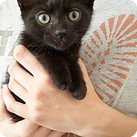 Adopt A Pet :: Elliot - Nashville, TN