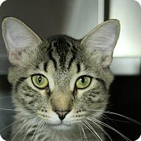 Adopt A Pet :: Spike - Sarasota, FL