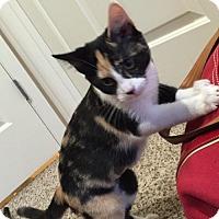 Adopt A Pet :: Arwen - Cincinnati, OH