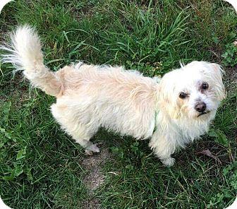 Terrier (Unknown Type, Small) Mix Dog for adoption in Renton, Washington - Becka