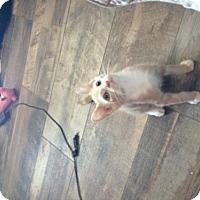 Adopt A Pet :: Punkin - Crestview, FL