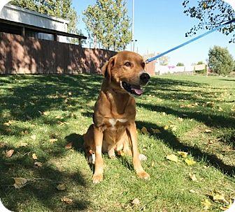 Hound (Unknown Type) Mix Dog for adoption in Elyria, Ohio - Duke