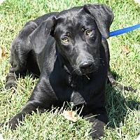 Adopt A Pet :: Radar - Falls Church, VA