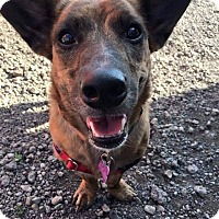 Adopt A Pet :: Blossom - Youngstown, OH