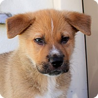 Adopt A Pet :: White Fang - Los Angeles, CA