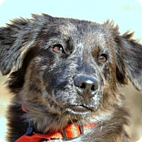Adopt A Pet :: Remy - Brattleboro, VT