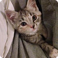 Adopt A Pet :: Boo - Morganton, NC