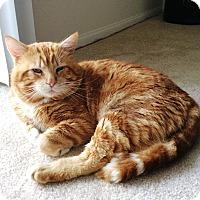 Adopt A Pet :: Bobo - Orange, CA