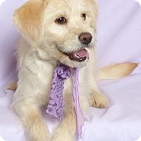 Adopt A Pet :: Skye - Kerrville, TX