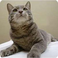 Adopt A Pet :: Casanova - Chicago, IL