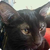 Adopt A Pet :: Bagira - Winchester, CA