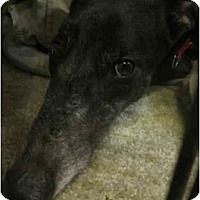 Adopt A Pet :: Cruiser (TMC's Cruiser) - Chagrin Falls, OH