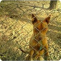 Adopt A Pet :: Zee - Emory, TX