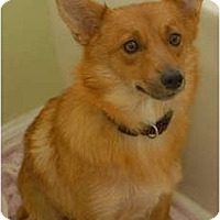 Adopt A Pet :: Penny - Murfreesboro, TN