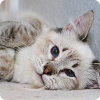 Adopt A Pet :: Lexie - Davis, CA
