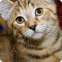 Adopt A Pet :: Josie - Irvine, CA
