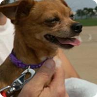Adopt A Pet :: Miles - Davenport, IA