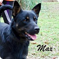 Adopt A Pet :: Max - Daleville, AL