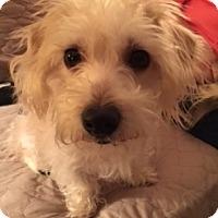 Adopt A Pet :: Jessa - Beavercreek, OH