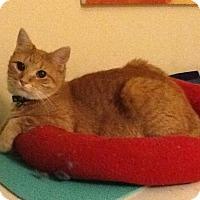 Adopt A Pet :: Summer - San Antonio, TX
