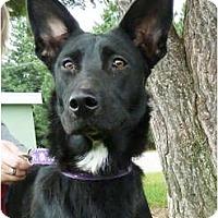 Adopt A Pet :: Lady aka Mina - FOSTER ME! - Detroit, MI