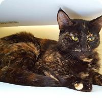Adopt A Pet :: Trefoils - Salisbury, MA