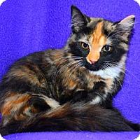 Adopt A Pet :: Abby - Buford, GA