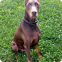 Adopt A Pet :: Baja--pending - New Richmond, OH